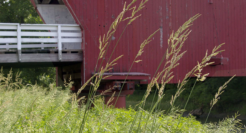 Stalks of grass in front of red painted Hogback Covered Bridge, one of the six remaining Bridges of Madison County near Winterset, Iowa