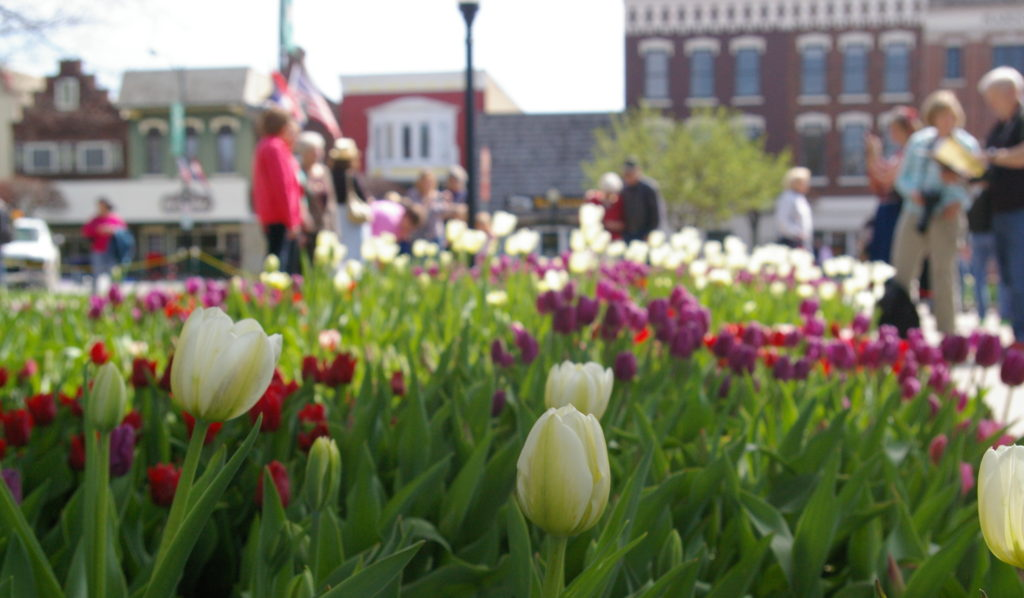 Colorful tulips with people in the background during Tulip Time in Pella, Iowa