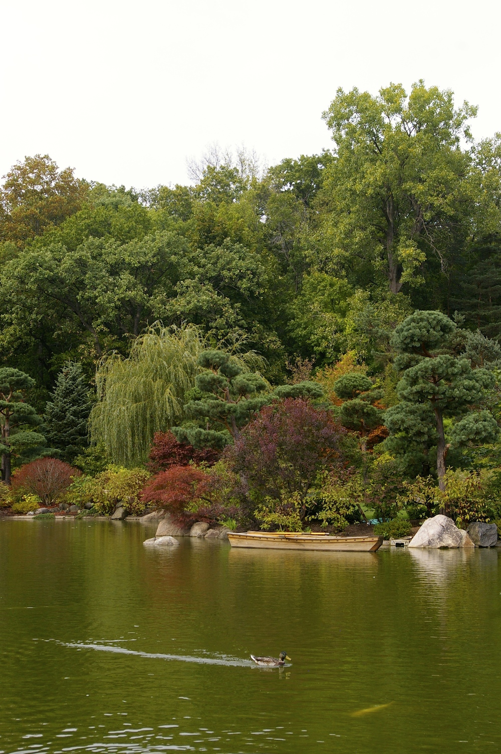 Pond at Anderson Japanese Gardens in Rockford, Illinois