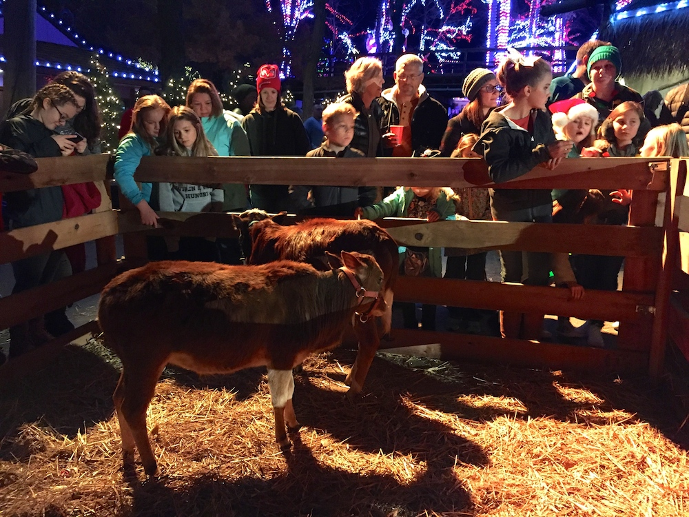 Petting zoo near the Sounds of the Nativity pavilion at Worlds of Fun's WinterFest in Kansas City, Missouri