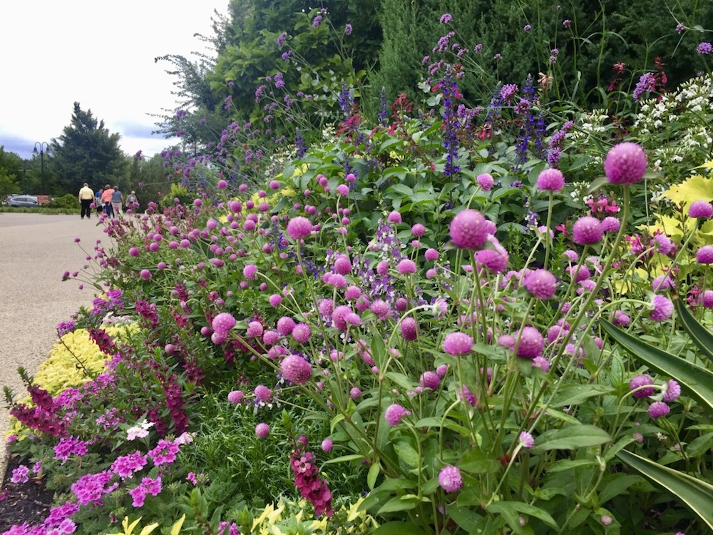 Wild flowers at Morton Arboretum in Lisle, Illinois
