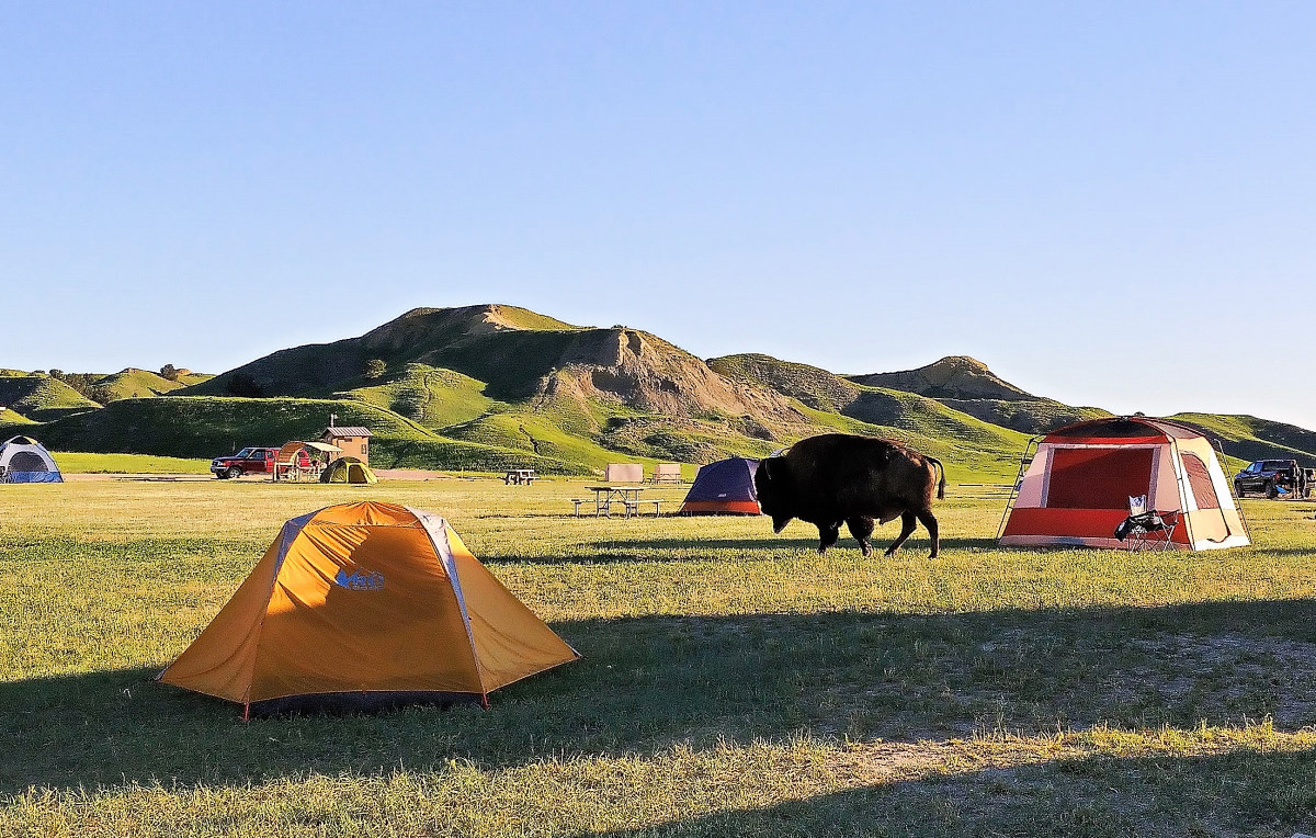 Bison near campsite in Badlands National Park