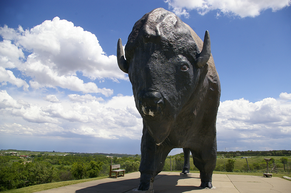 Large brown and black sculpture of a bison named Dakota Thunder, the World's Largest Buffalo, standing on the top of a hill against blue sky in Jamestown, North Dakota
