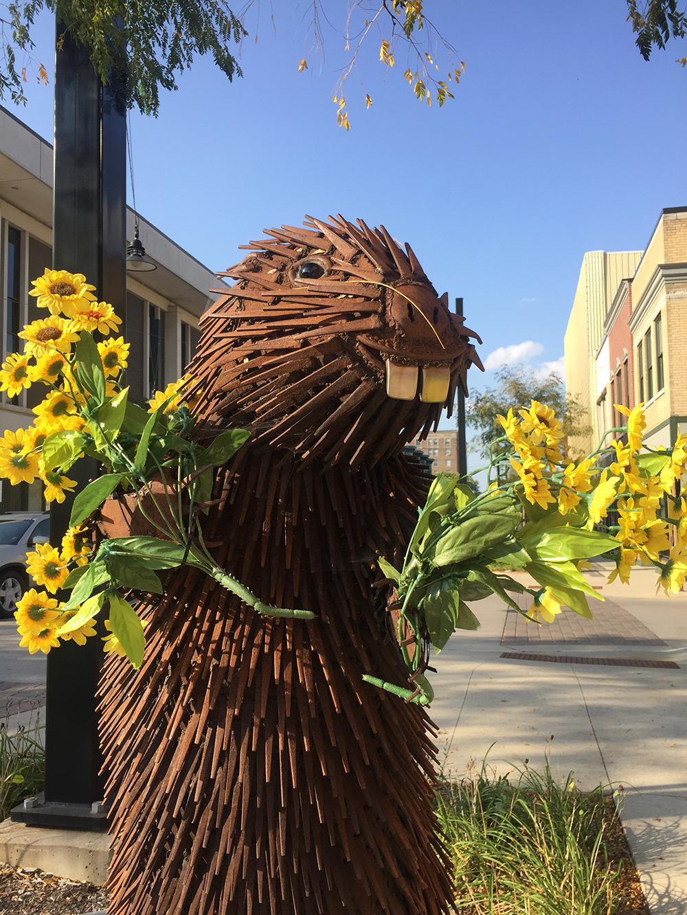 Sculpture of beaver holding bunches of yellow flowers on the River City Sculptures on Parade in Mason City, Iowa