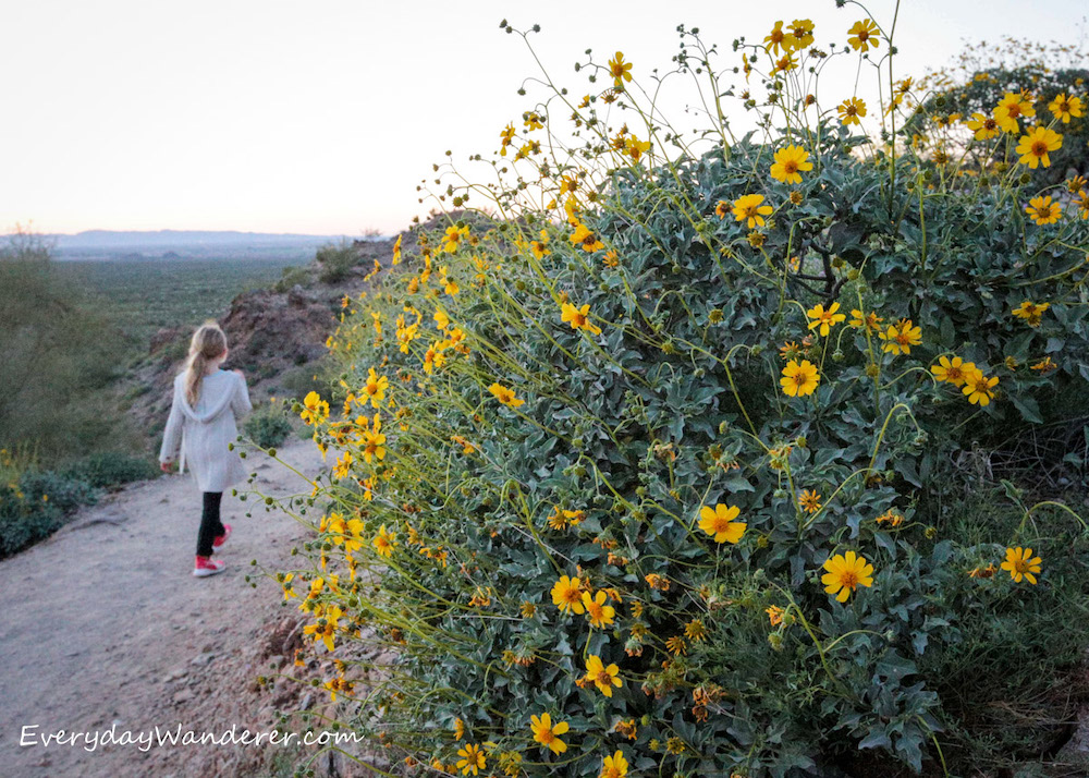 Blonde girl walking on dirt trail next to bush of bright yellow wildflowers
