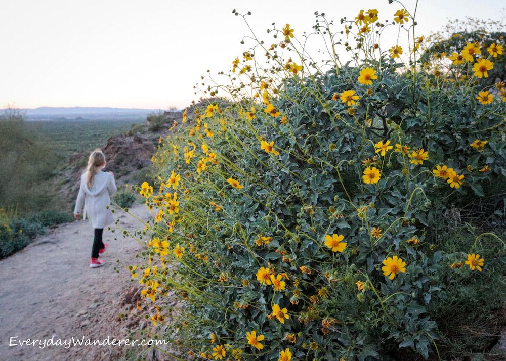 Blonde girl walking on dirt trail next to bush of bright yellow wildflowers
