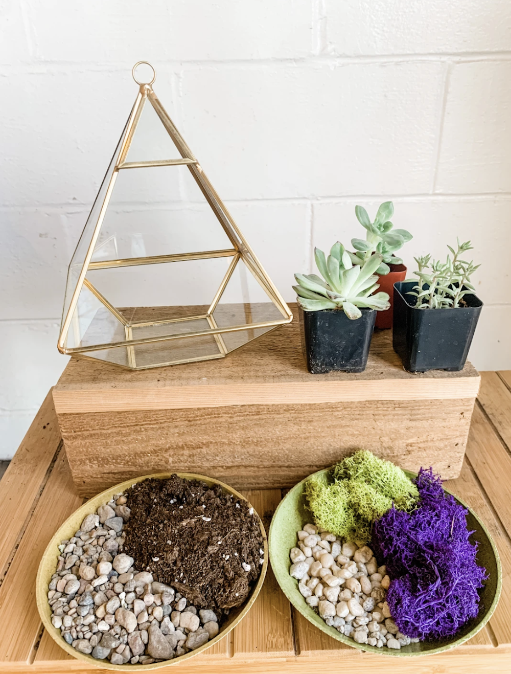 Terrarium kit with plants, materials and container from Art Terrarium
