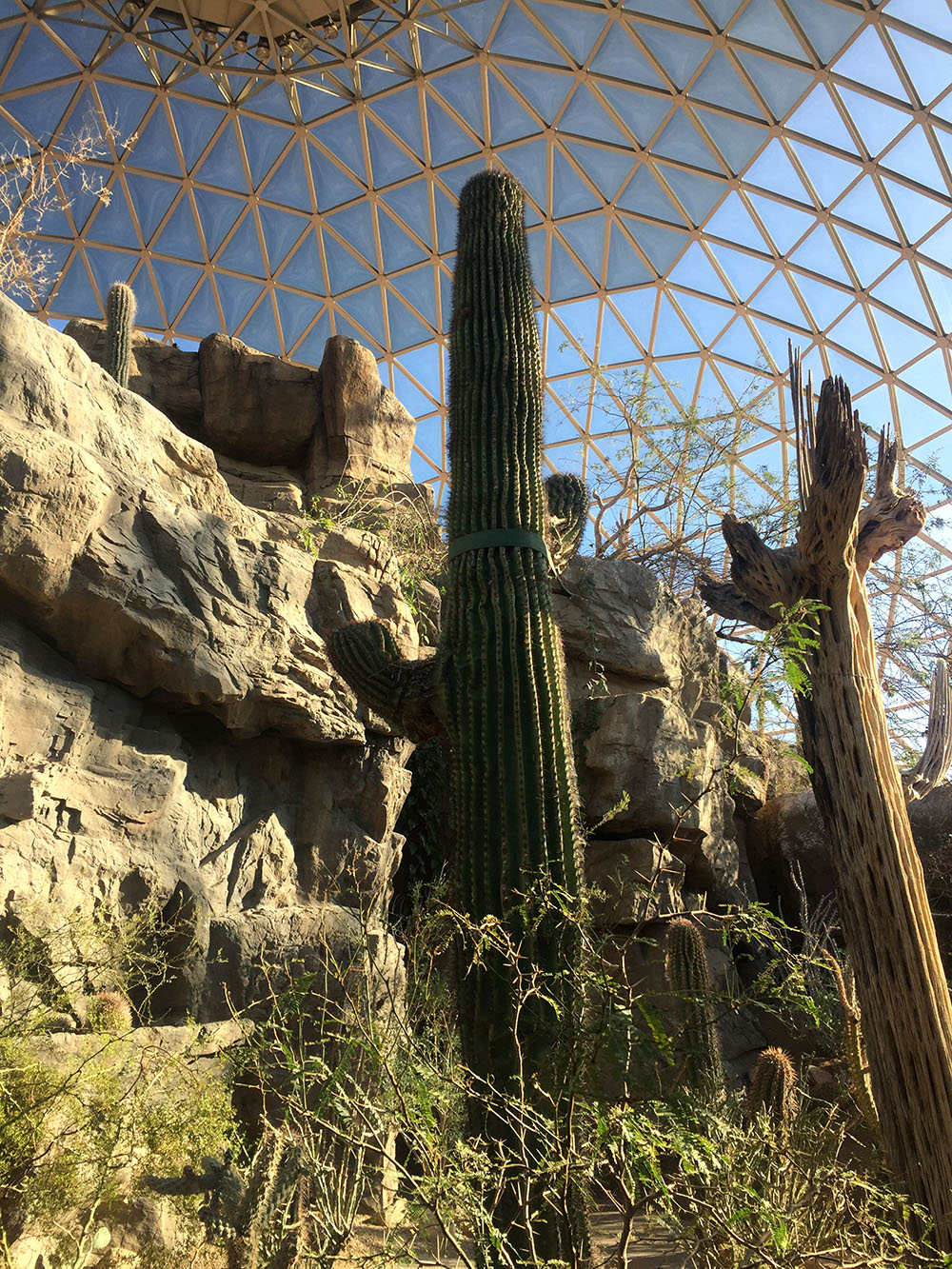 Cacti inside the desert dome at Omaha's Henry Doorly Zoo and Aquarium