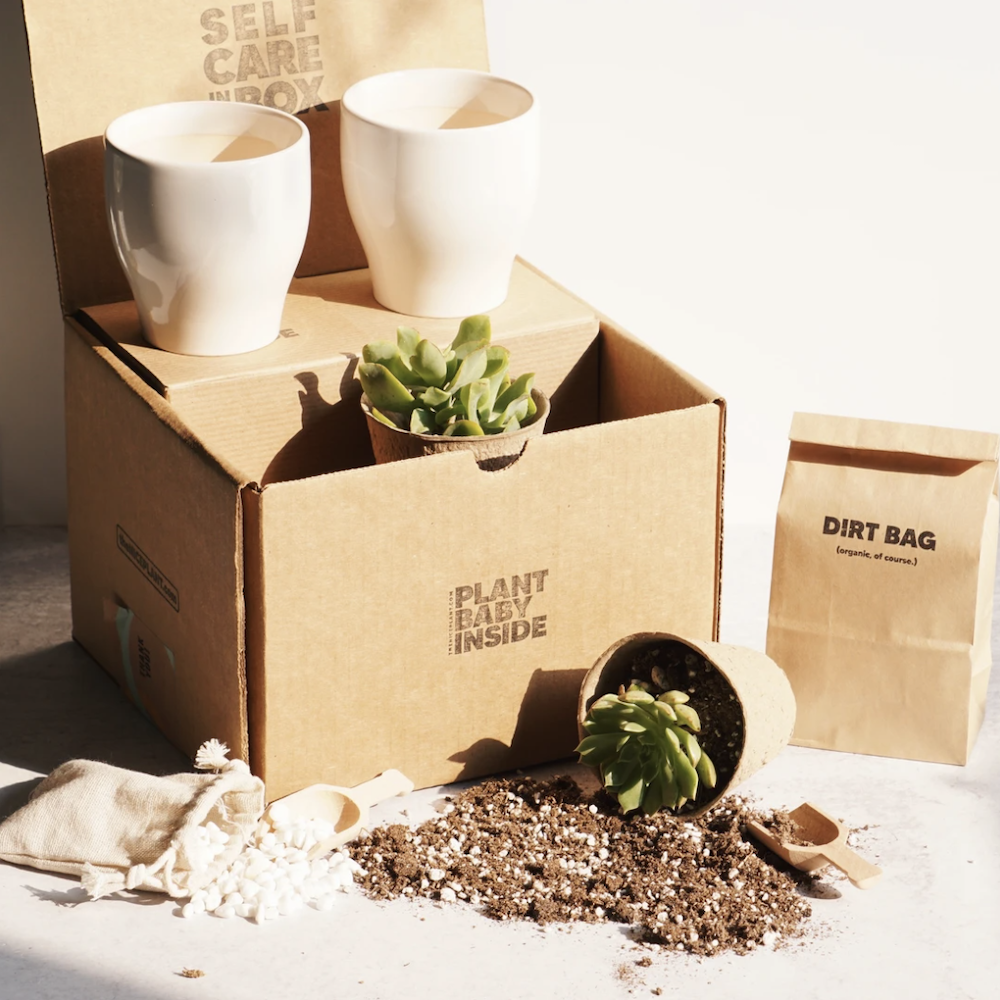 The Nice Plant's Plant it Yourself Box