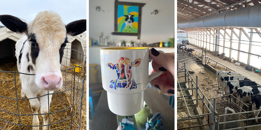 Graphic for New Day Dairy Guest Barn in Clarksville, Iowa