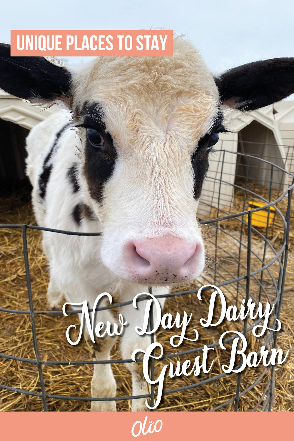 Looking for a unique Iowa weekend getaway? Plan a visit to the New Day Dairy Guest Barn in Clarksville, Iowa! This fun accommodation at a working dairy farm will give you the perfect place to relax while getting a behind-the-scenes look at what it takes to be a dairy farmer. #Iowa #Midwest #travel #MidwestGetaway