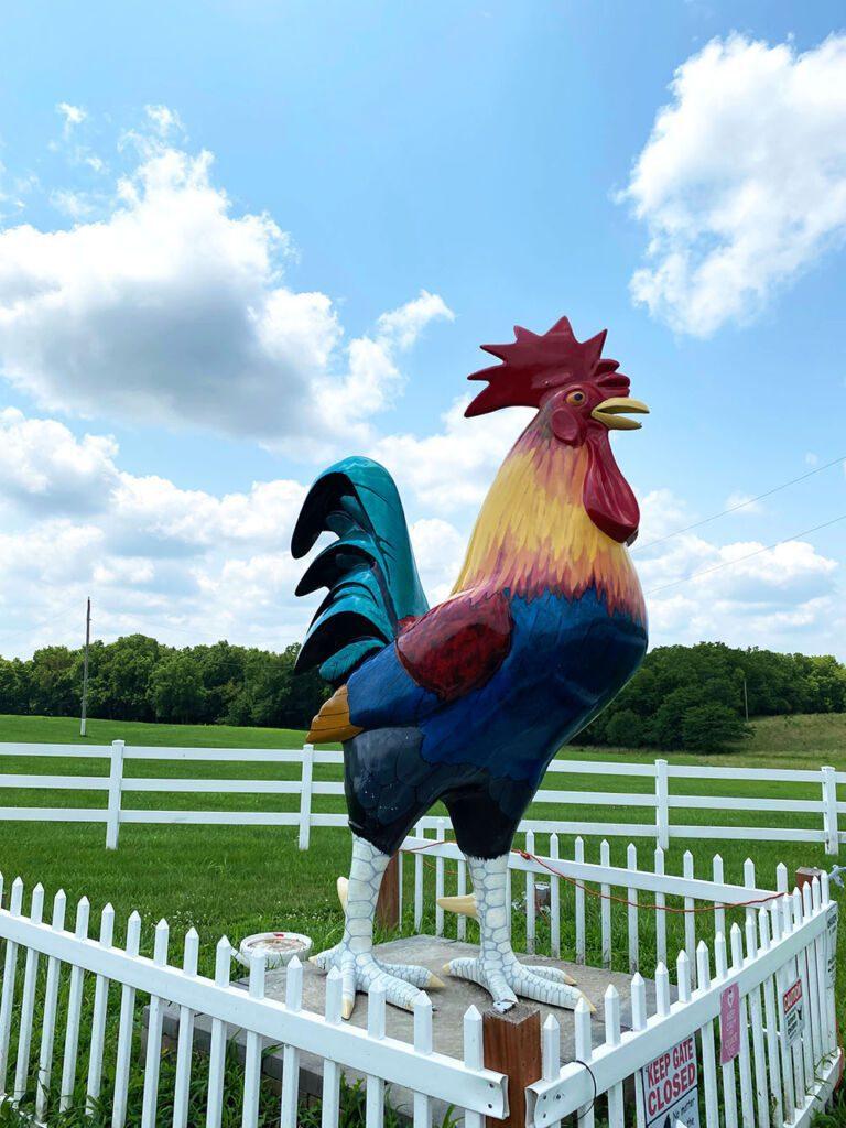 Fiberglass chicken statue named Chick Norris near Gardner, Kansas